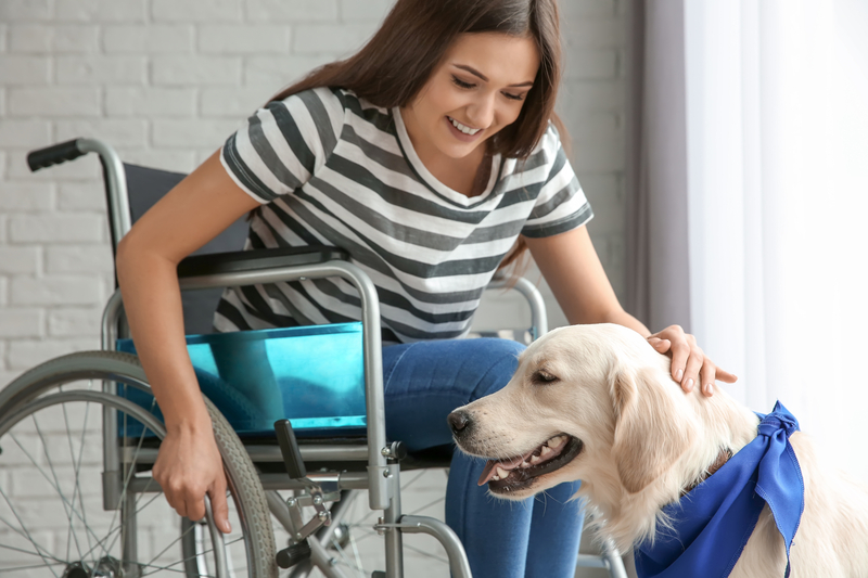 This image has an empty alt attribute; its file name is dreamstime_s_110101259-wheelchair.jpg